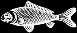 fish-hi